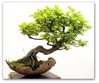 Jardins zen japonais et bonsa japon passion de sylv1 - Video bonsai jardin japonais ...