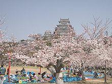 Hanami au pied du château de Himeji