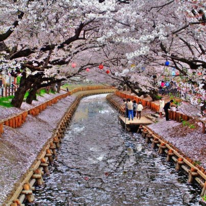 Japan-Dreams